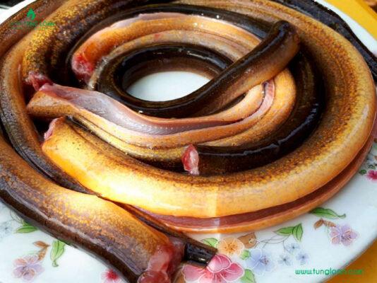 Cách làm sạch nhớt lươn