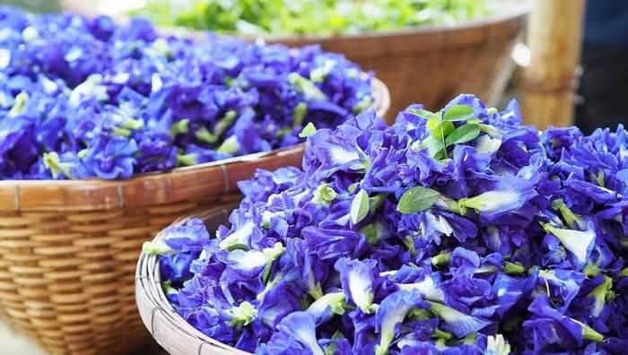 Công dụng của bột hoa đậu biếc trong làm đẹp da